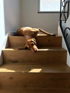 Dog lying by the stairs.