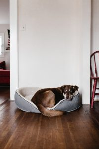 Dog resting on a dog bed.