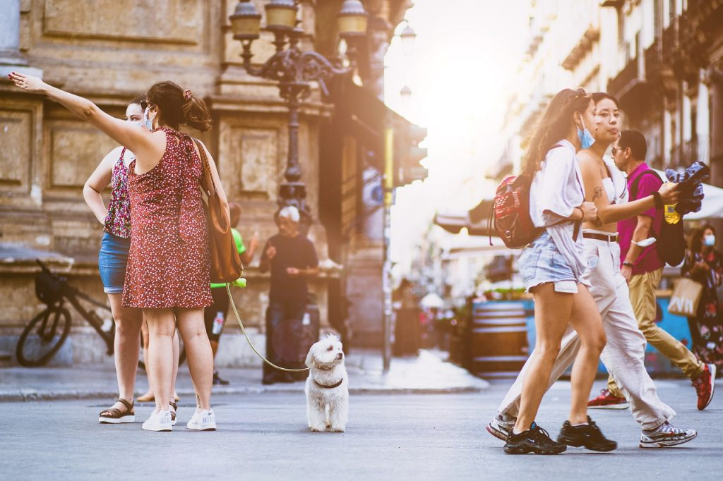 Dog on street surrounded by people.