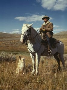 Dog on field with a cowboy and horse.