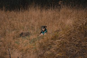 Dog surrounded by big grass/