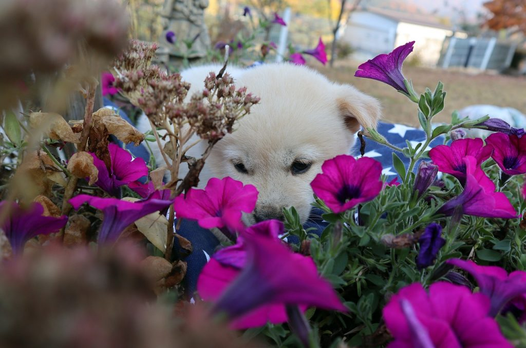 Puppy surrounded by flowers.