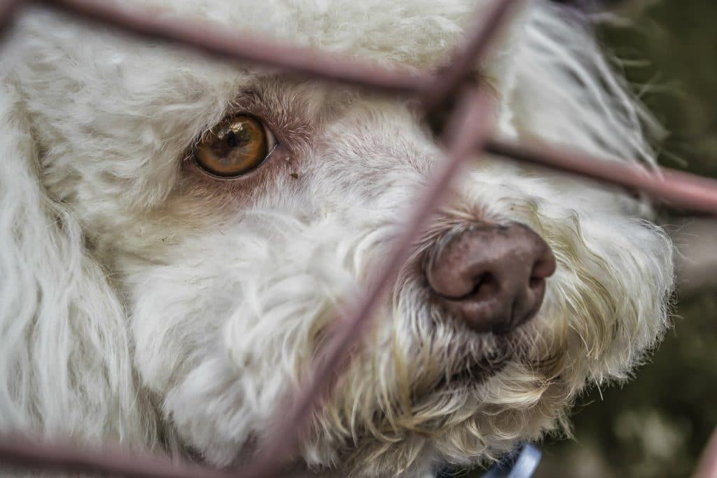 A sad dog by wire fence.