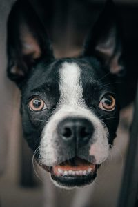 Shocked face of a dog.