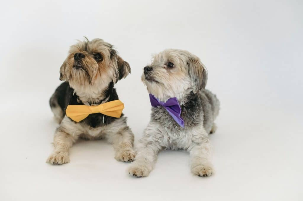 Two dogs with bow ties.
