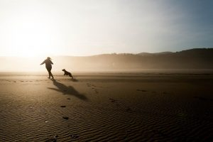 Dog chasing a person by beach.
