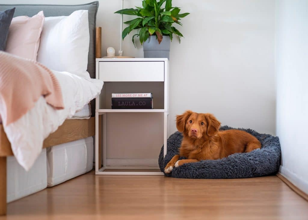 Dog on a dog bed.