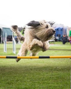 Dog jumping over a pipe.