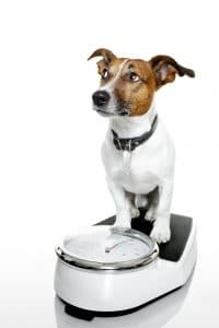 Dog on a weighing scale.