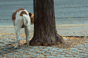 Dog sniffing on a tree.