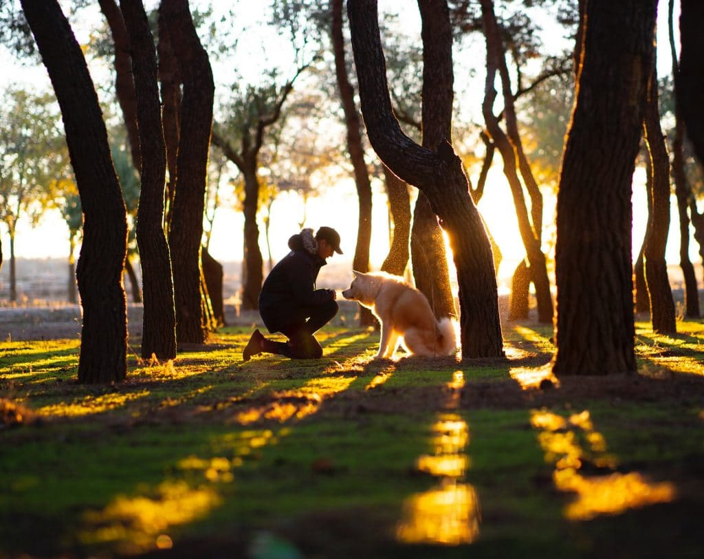 Man and dog by trees.