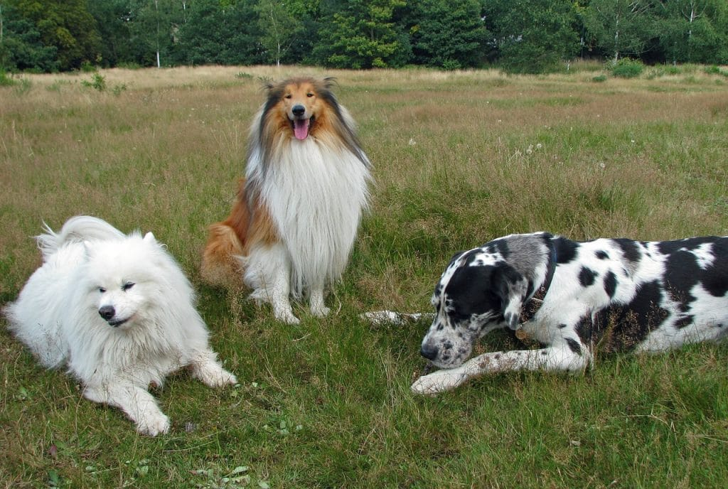 Three dogs with different breeds.