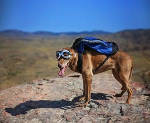 Dog with a backpack in a mountain.
