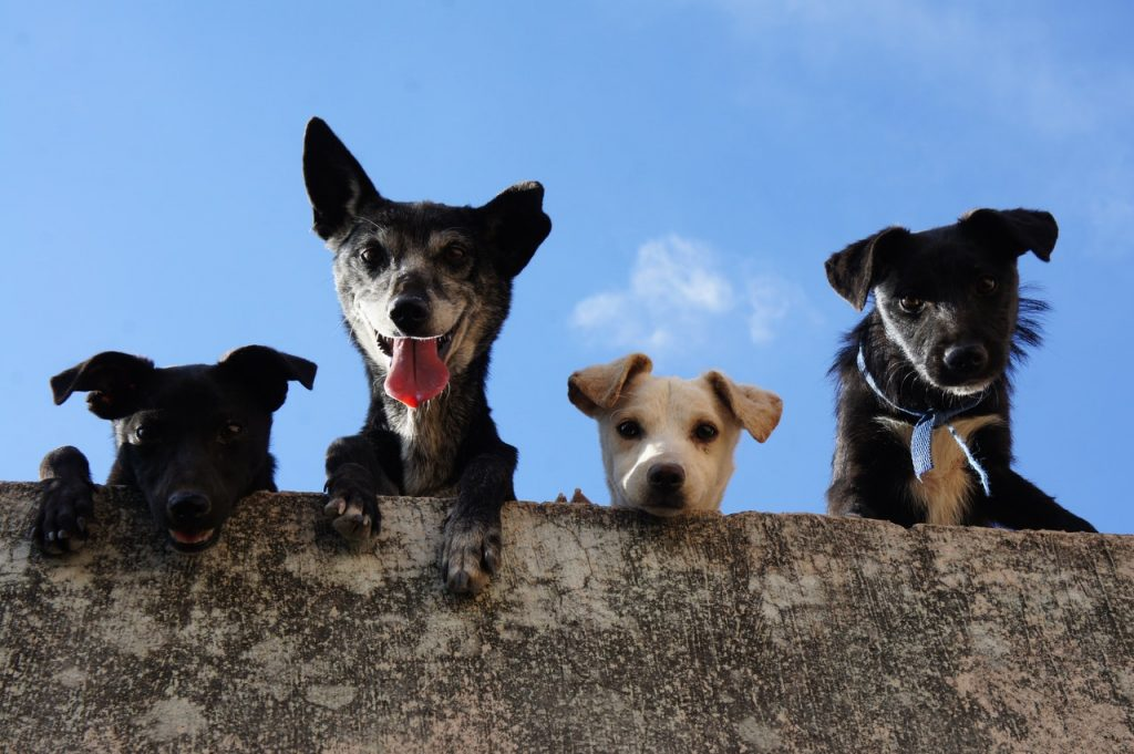 Group of dogs on top.