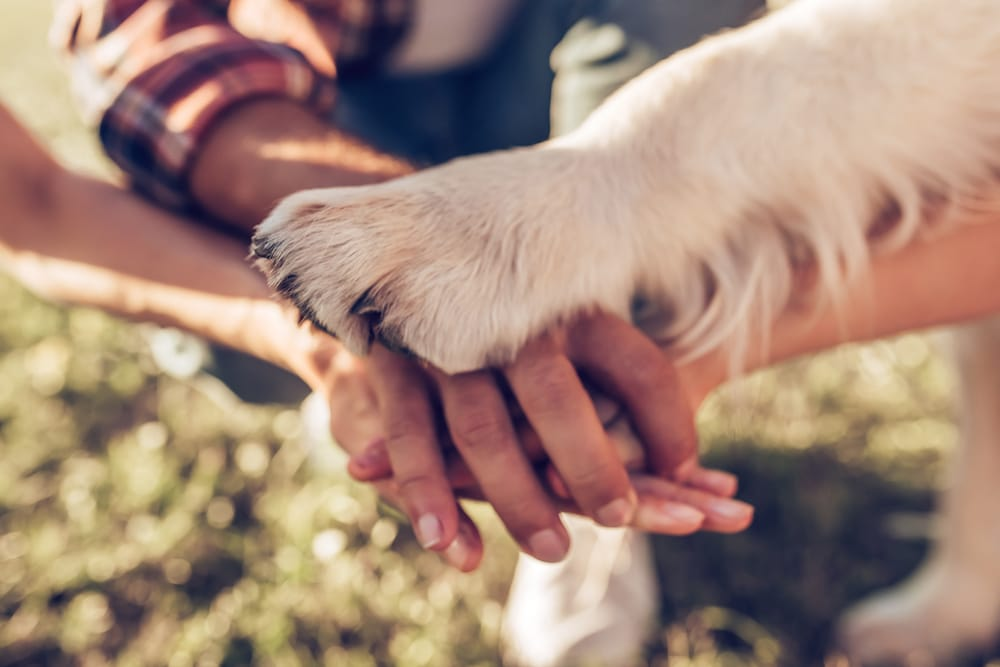 Family members' hands and dog paw.