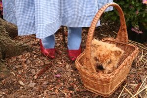 Toto in basket.