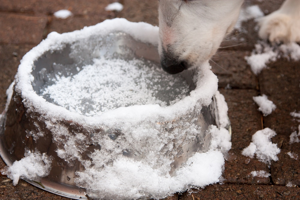 Dog's water turned into ice.