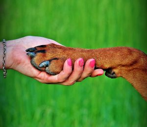 Person holding dog's paw.